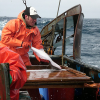 MCA Comments on Annual Catch Limits (NS1)